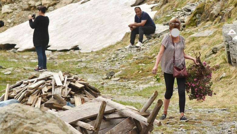 Bujorii de munte, protejați prin lege! Ce amendă riscă femeia fotografiată după ce a rupt o tufă